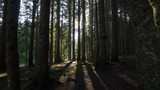 Walking through mysterious forest. POV. UHD, 4K - 162594297