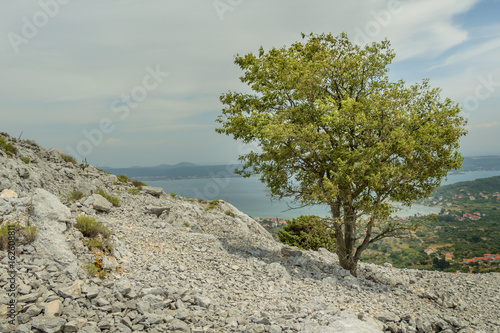 lone bushy tree at stone hill slope at island Pasman in Croatia Poster