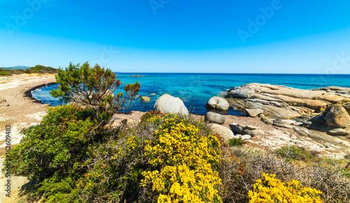 Foto op Plexiglas Cyprus Vegetation and rocks in Sant'Elmo beach