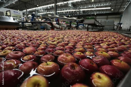 Beneficiamento de maçã