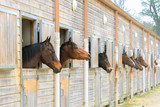 Horses in stable, boxes, riding school - 162643840
