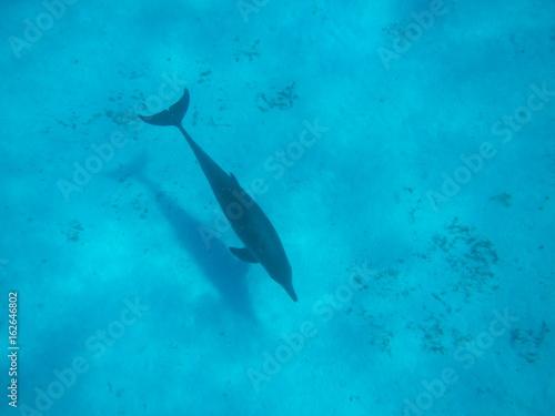 Foto op Aluminium Zanzibar Dolphin / Mnemba Island, Zanzibar Island, Tanzania, Indian Ocean, Africa