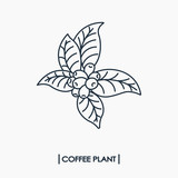 Line icon coffee plant with leaf and beans