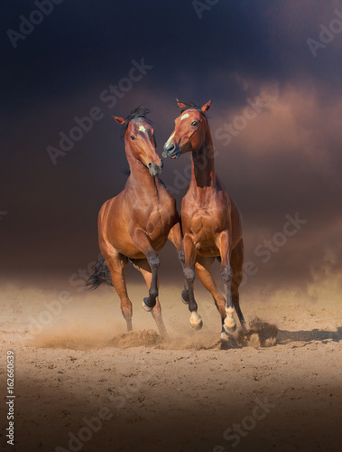 Obraz Fotograficzny Two bay horses play with each others on the sand on evening sky background