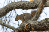 Squirrel - 162663666