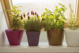 homegrown herbs - 162671012