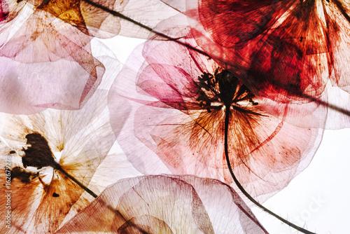 piekne-kwiaty-na-sciane-pokoju-dziennego