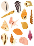 Sea snail shells collection isolated on white background