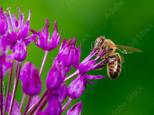 Aluminium Bee Bee collecting nectar from flower