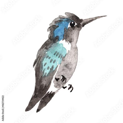 himmelvogel-colibri-in-wild-lebende-tiere-durch-die-aquarellart-lokalisiert-wilde-freiheit