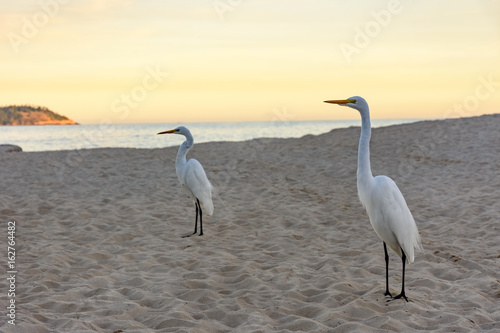 White heron perches on the sand of Ipanema beach at sunset Poster