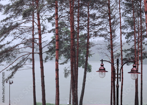 Poster pines and lantern in fog