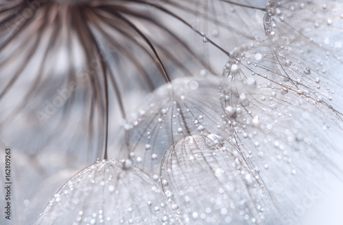 Abstract photo of a dandelion with water drops. Selective focus - 162809263