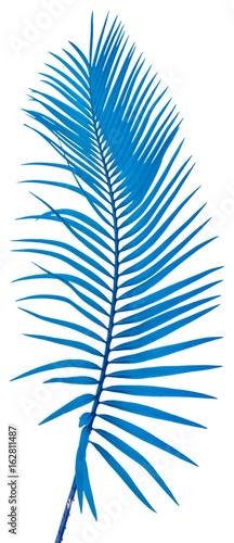 palme bleue, fond blanc