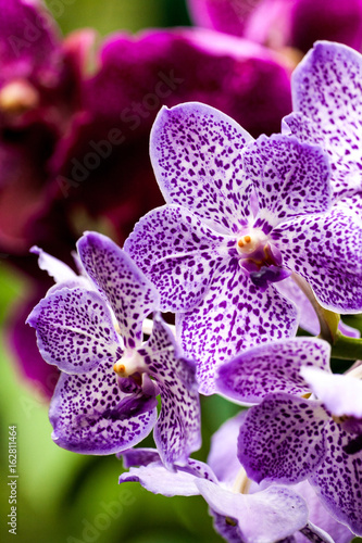 Singapore Orchid Garden Poster