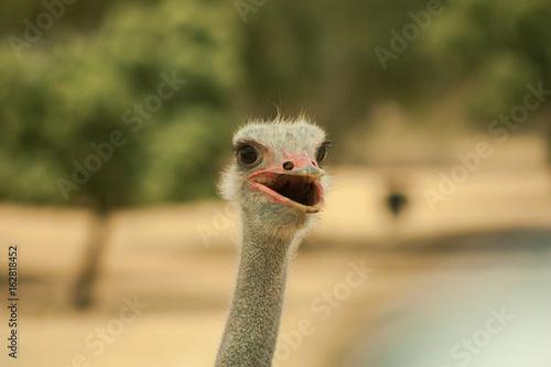 avestruz ñandú safari madrid sierra