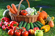 Variety of fresh organic vegetables and fruits in the garden - 162827252