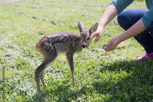 Taking care of a baby deer, wildlife rescue плакат