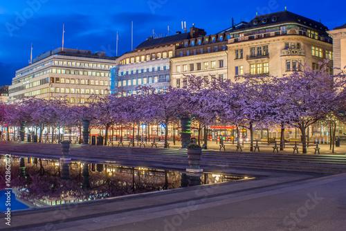 Blommande körsbärsträd vid dammen i Kungsträdgården  i Stockholm