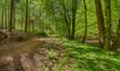 Waldweg Naturschutzgebiet im Sommer - 162918679