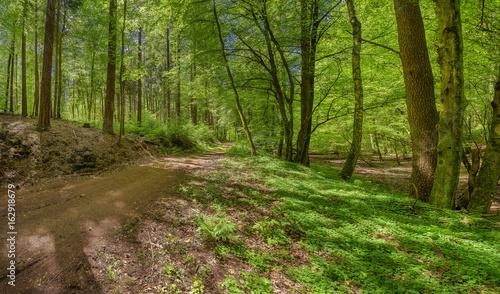 In de dag Weg in bos Waldweg Naturschutzgebiet im Sommer