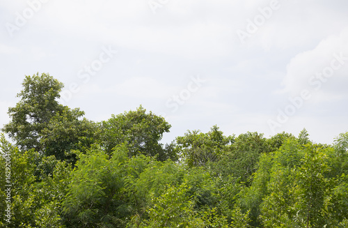 Green bush trees with clear sky background.