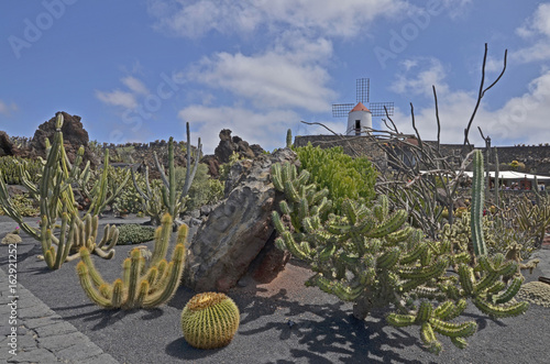 The view of cactus garden with a windmill - a popular tourist attraction on Lanzarote