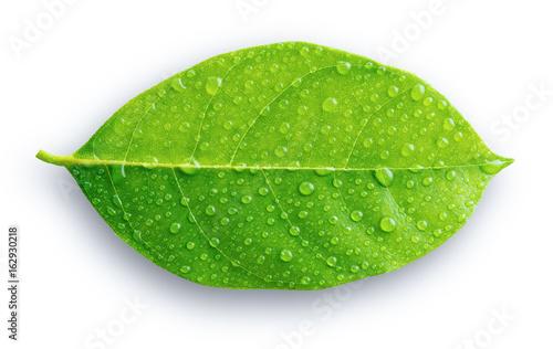 Zielony liść z kroplami woda na białym tle
