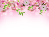 Flowers background with amazing spring sakura with butterflies. Flowers of cherries. - 162935075