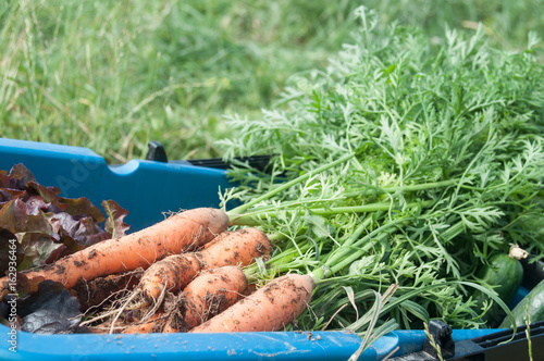 panier garni de légumes frais dans un champ bio