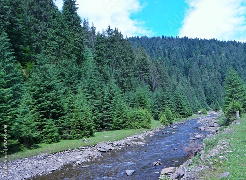 Carpathian forest and mountain river, Ukraine