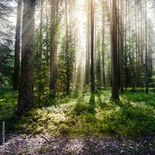 Forest. Wild plants and trees