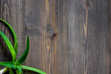 Aloe vera leafs on wooden table background top view copyspace - 162968224