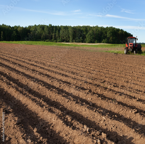Field with a potato furrows.