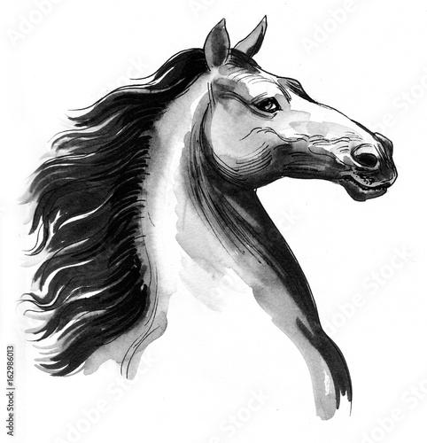 Beautiful horse - 162986013