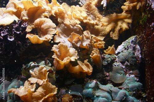 Musée Aquarium de Bruxelles : Poissons et coraux