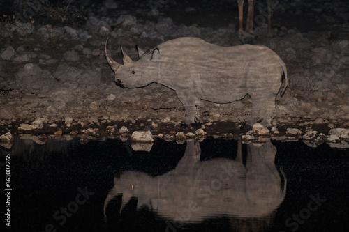 Spitzmaulnashorn an Wasserstelle bei Nacht, Etosha Nationalpark, Namibia