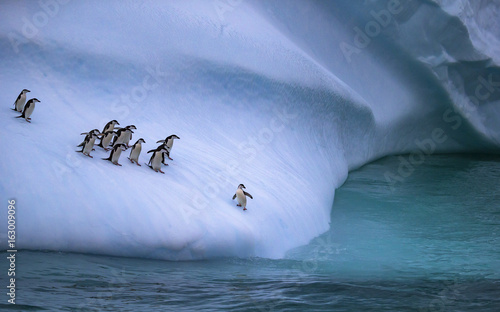 Aluminium Pinguin The colony of penguins approaches the water. One penguin stands on the slope of the iceberg near the water. Andreev.