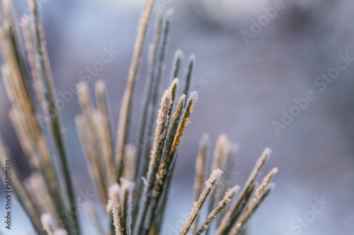 Fotobehang Winterlandschap Frozen tree