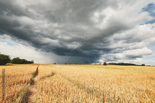 Storm and ripe cereal fields