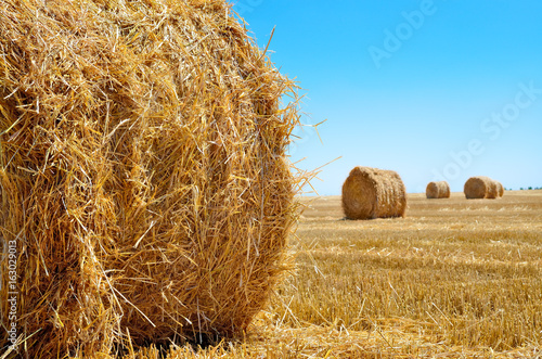 Round bales of straw lie in the field after harvesting Poster