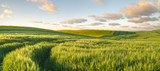 Green, spring field, panorama - 163060295