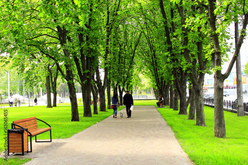 city park with green trees