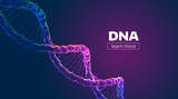 Abstract vector DNA structure. Medical science background - 163074248