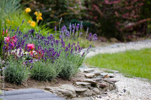 summer flowers in the garden - lavender