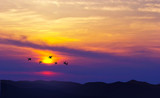Birds flying at sunset over the mountains - 163089625