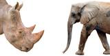Elephant and Rhinoceros isolated on white background - 163103861