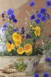 Kornblumen und Goldmohn in einer Pflanzschale