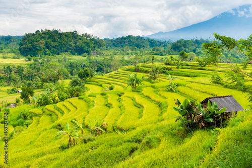 Foto op Aluminium Rijstvelden Green rice terrace fields in Bali, Indonesia