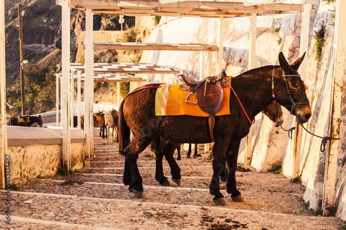 Fotobehang Santorini Donkey in Santorini, Greece